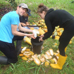 volunteer work social project in environment nature South-America